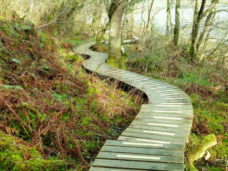 Non slip GRP decking strips used on woodland pathway