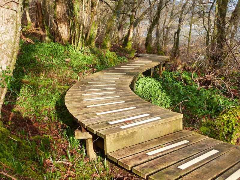 Anti Slip Decking Strips on slippery woodland decking