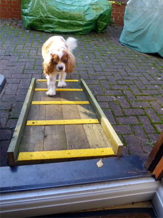 high vis non slip deck ramp for pet safe walkway