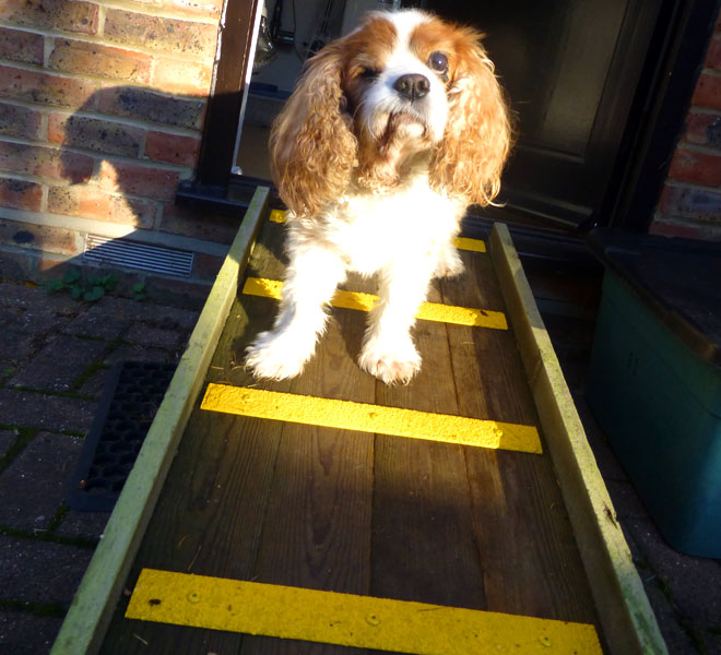 king charles cavalier dog ramp with anti slip decking strips.