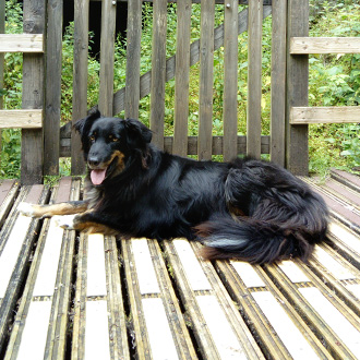 Pets approve of non slip decking strip areas!
